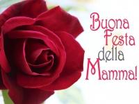buona_festa_della_mamma_rosa_rossa.jpg